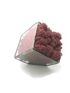 Флораріум кашпо Моссаріум зі стабілізованим мохом червоний 7 см