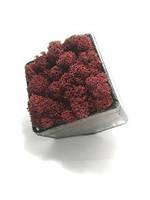 Флораріум кашпо Моссаріум зі стабілізованим мохом червоний 7 см, фото 2