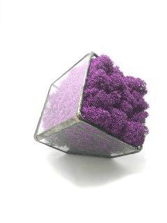 Флораріум кашпо Моссаріум зі стабілізованим мохом фіолетовий 15 см