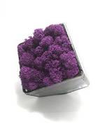Флораріум кашпо Моссаріум зі стабілізованим мохом фіолетовий 15 см, фото 2