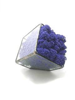 Флорариум кашпо Моссариум со стабилизированным мхом синий 15 см