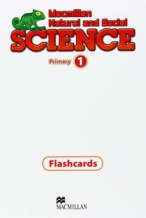 Macmillan Natural and Social Science 1 Flashcards, фото 2