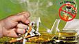 Монастырский чай от курения Сборы против курения, фото 2