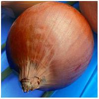 МУНДО - цибуля ріпчаста, Syngenta 250 000 насінин