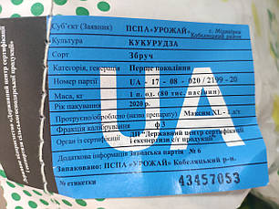 "Кукурудза ""Збруч"" ФАО 310, 1 мішок (80тис. насінин), фото 3"