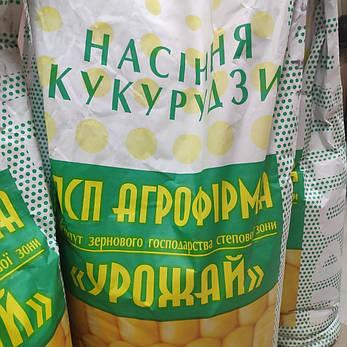 "Кукурудза ""Збруч"" ФАО 310, 1 мішок (80тис. насінин), фото 2"