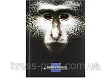"""Блокнот """"Vivid Colours"""" А5, 80 арк., карток./поров., кліт., """"мавпа"""""""