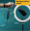 Кольцевая лампа 30 см со штативом 2 м для селфи Светодиодная кольцевая лампа, фото 5