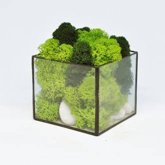 Флораріум кашпо Моссаріум куб зі стабілізованим мохом мікс 10 см