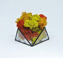 Флорариум кашпо Моссариум со стабилизированным мхом геометрический микс 7 см, фото 3