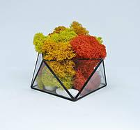 Флорариум кашпо Моссариум со стабилизированным мхом геометрический микс 7 см, фото 2