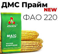 Середньоранній гібрид кукурудзи ДМС Прайм ФАО 220 МАЇС Дніпро 2020 насіння кукурудзи