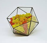 Флорариум кашпо Моссариум со стабилизированным мхом икосаэдр микс оранжевый с желтым 7 см, фото 2