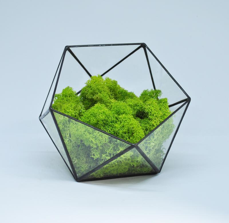 Флорариум кашпо Моссариум со стабилизированным мхом икосаэдр зеленый 7 см