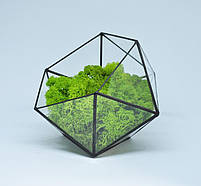 Флорариум кашпо Моссариум со стабилизированным мхом икосаэдр зеленый 7 см, фото 2
