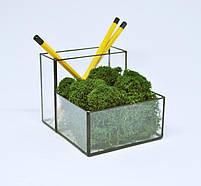 Флораріум кашпо Моссаріум органайзер зі стабілізованим мохом зелений, фото 2