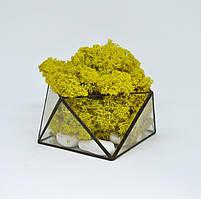 Флорариум кашпо Моссариум со стабилизированным мхом геометрический желтый 15 см