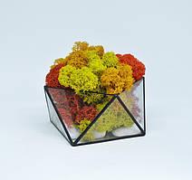 Флорариум кашпо Моссариум со стабилизированным мхом геометрический микс 10 см