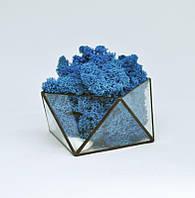 Флорариум кашпо Моссариум со стабилизированным мхом геометрический синий 10 см