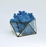 Флорариум кашпо Моссариум со стабилизированным мхом геометрический синий 15 см