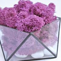 Флорариум кашпо Моссариум со стабилизированным мхом геометрический фиолетовый 10 см