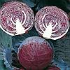 ПРИМЬЕРО F1 - семена капусты краснокочанной 2 500 семян, Bejo Zaden