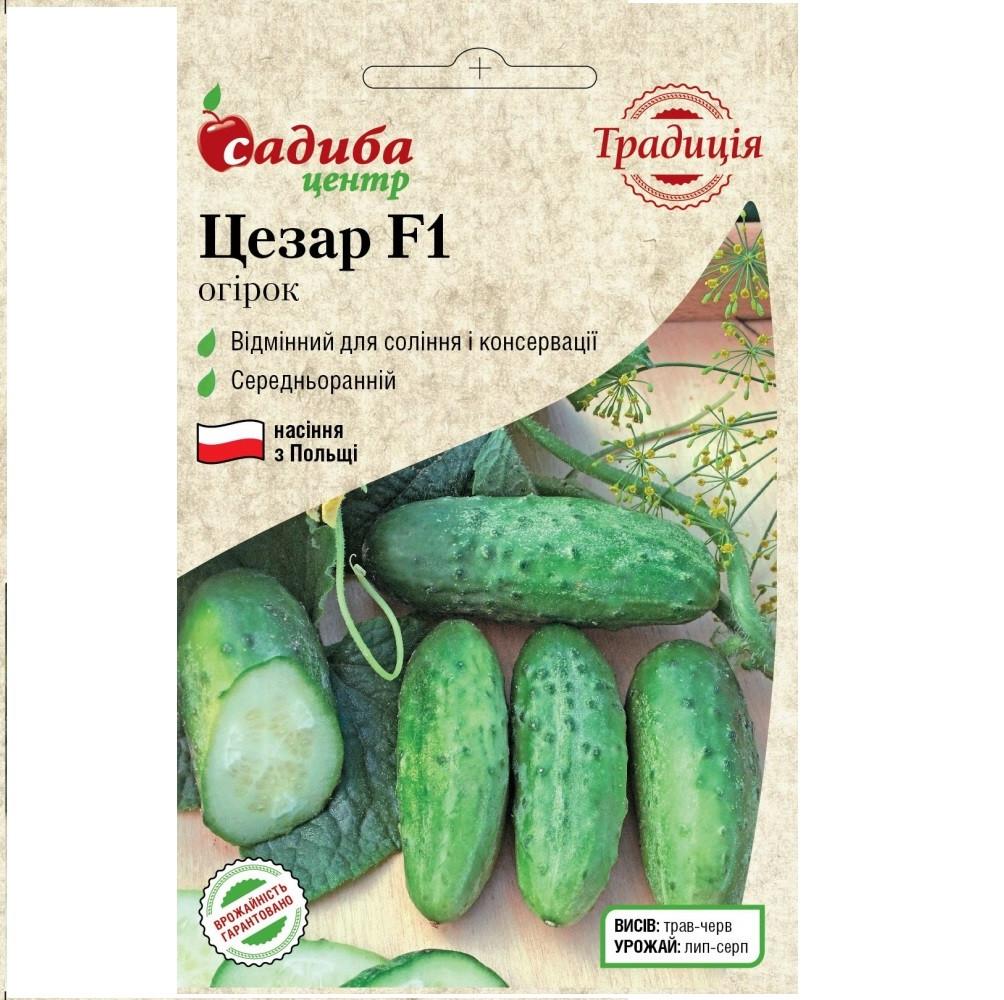 Цезар F1 насіння огірка бджолозапильного (Традиція) 20 шт