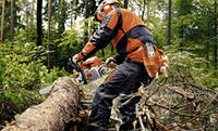 Бензопилы для ухода за деревьями