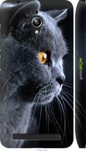 "Чехол на Asus Zenfone Go ZC500TG Красивый кот ""3038c-160-2448"""