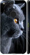 """Чехол на Google Pixel XL Красивый кот """"3038c-401-2448"""""""