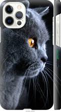 """Чехол на Apple iPhone 12 Красивый кот """"3038c-2053-2448"""""""