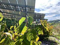 Нидерландские аграрии устанавливают солнечные панели, чтобы улучшить урожай фруктов