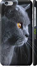 """Чохол Apple iPhone 6 Красивий кіт """"3038c-45-2448"""""""