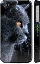 """Чехол на iPhone 4 Красивый кот """"3038c-15-2448"""""""