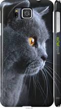 """Чехол на Samsung Galaxy Alpha G850F Красивый кот """"3038c-65-2448"""""""
