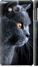 "Чехол на Samsung Galaxy A7 A700H Красивый кот ""3038c-117-2448"""
