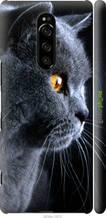 """Чехол на Sony Xperia XZ4 Красивый кот """"3038c-1623-2448"""""""