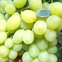 Виноград Хрускіт