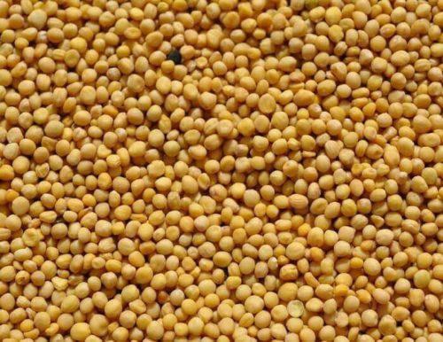 Гірчиця біла 1 кг насіння, фото 2