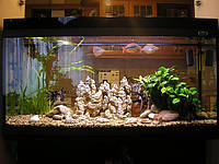 Профессиональное обслуживание аквариумов от 200 до 400 л