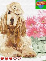 Картина по номерам Спаниель в шляпе с герберами +ЛАК 40*50см Барви Раскраска по цифрам Собака Пес