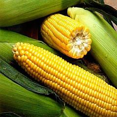 Семена Кукуруза сахарная Спирит F1 1 кг Syngenta 1686