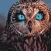 """Картина по номерам. Животные, птицы """"Тайная совушка"""" KHO4056"""