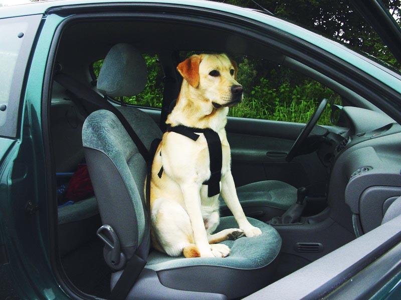 Pet Pro Шлея В АВТОМОБІЛЬ для собак