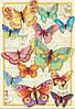 """Набір для вишивання хрестом """"Краса метеликів//Butterfly Beauty"""" DIMENSIONS 70-35338"""