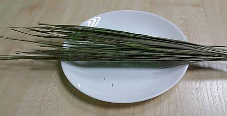 Зубровка 1кг, фото 2