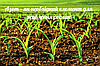 Азот – як необхідний елемент для живлення рослин