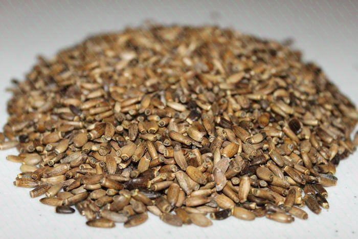 Розторопша насіння опт, фото 2