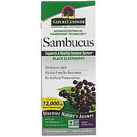 Черная бузина, экстракт, Sambucus, Nature's Answer, 120 мл