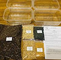 Набір для вирощування мікрозелені «Зелений Старт», фото 1